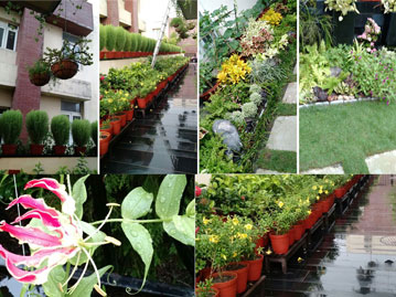 Home and office Landscape Decoration with Plants