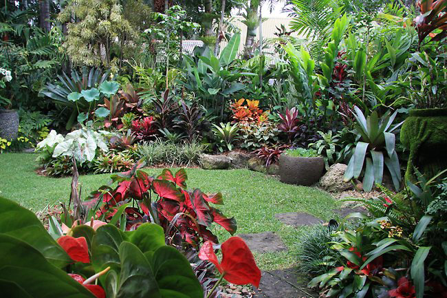 Colorful Tropical Garden 1